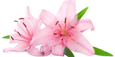 Presente flores floricultura