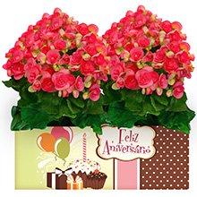 Feliz Aniversário com Begônias Rosa