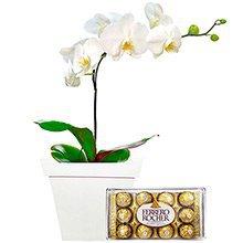 Orquídea Phalaenopsis com Ferrero Rocher