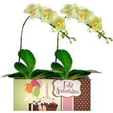 Feliz Aniversário com Orquídeas Amarelas