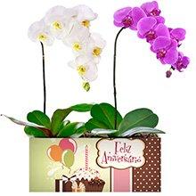 Feliz Aniversário com Orquídeas Pink e Branca