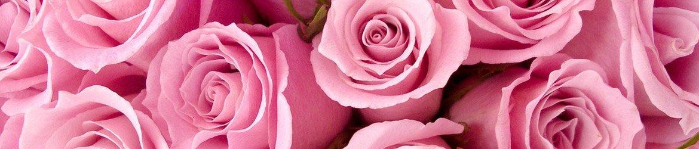 Buquês de Rosas Cor de Rosa