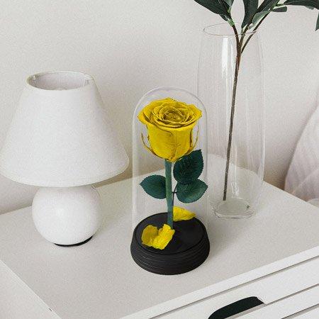 Rosa encantada amarela