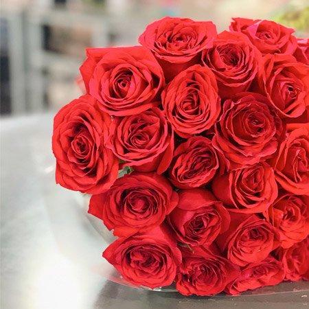 Rosas vermelhas da Nova Flor