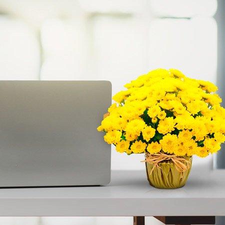 Vaso margaridinhas amarelas em cima da mesa