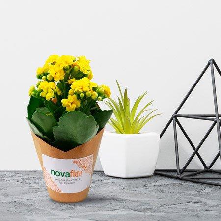 Kalanchoe amarela no vaso