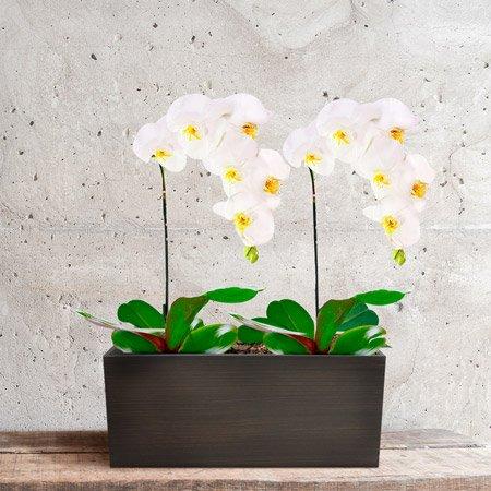 vaso com orquídeas brancas
