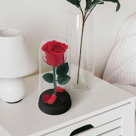 Rosa encantadas em cima de um cômodo