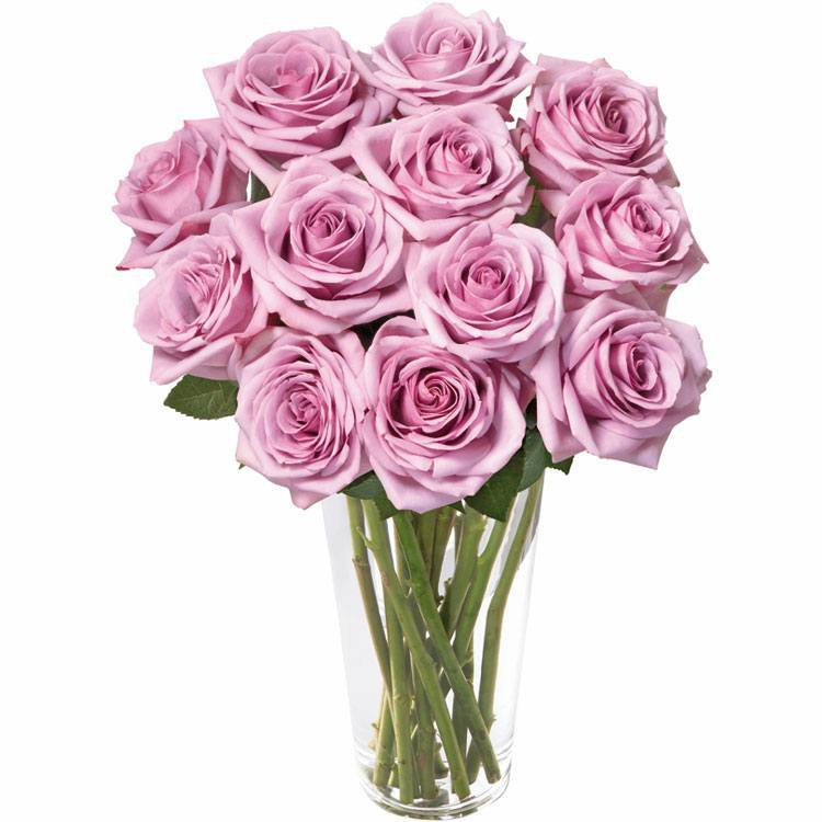 Brilhantes Rosas Lilás
