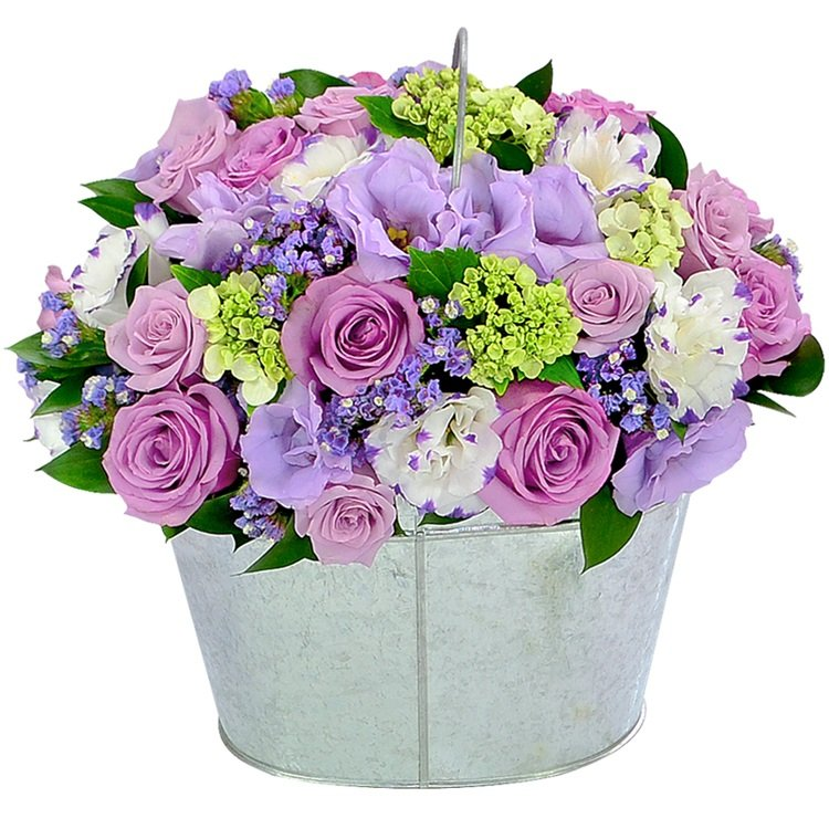 Noblesse de Flores Lilás