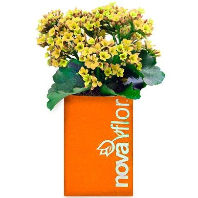 Flor da Fortuna Yellow