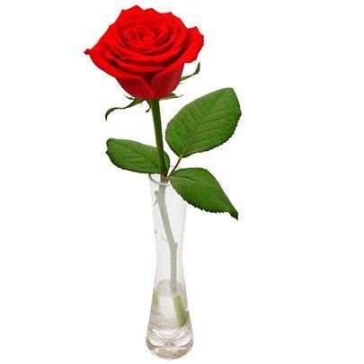 Solitário De Rosa Vermelha Nova Flor