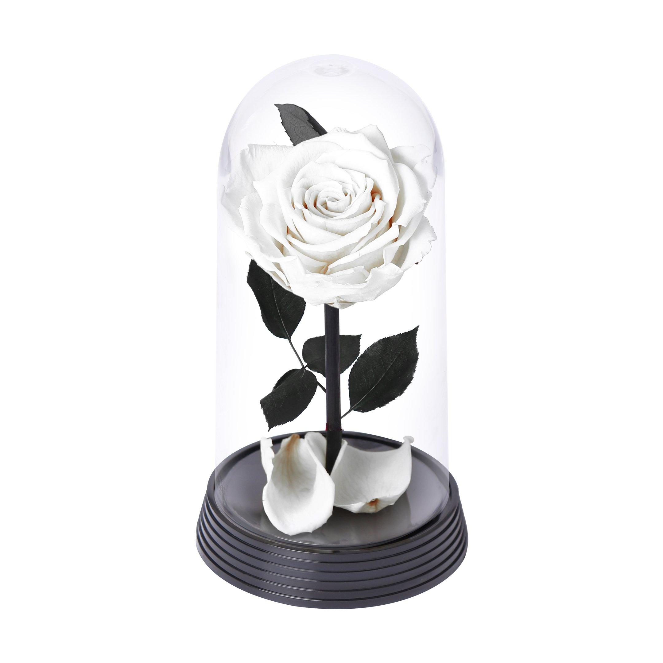 A Bela Rosa Branca