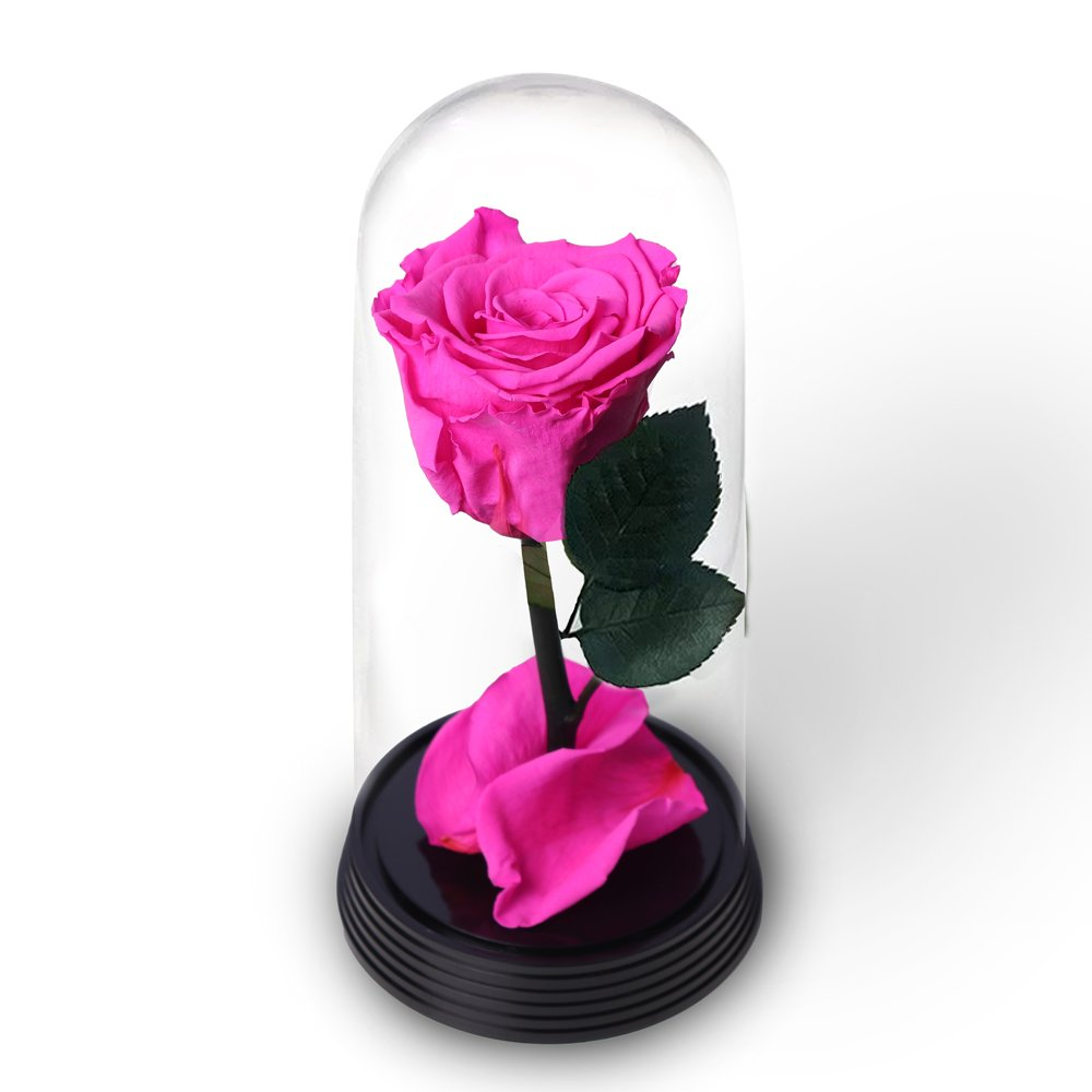 A Bela Rosa Pink